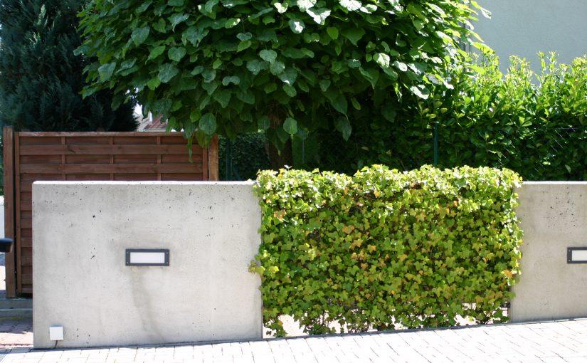 Neugestaltung Garten in Bruchköbel MKK. Vorgarten minimalistisch. Betonplatten, Efeu.