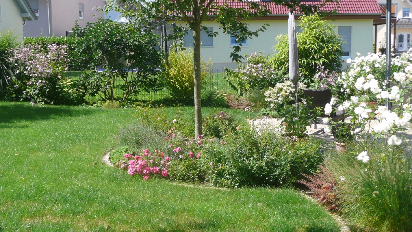 Neugestaltung Familiengarten in Bruchköbel Mkk. Bunte Staudenbeete und Rasen.