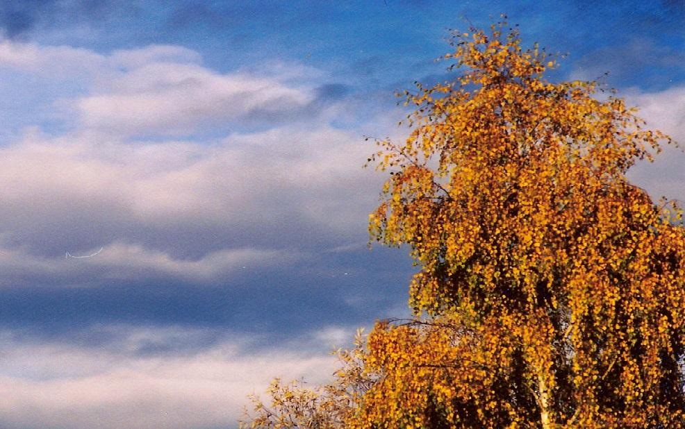 Herbstwetter | Wolken | Herbstfarben Birke