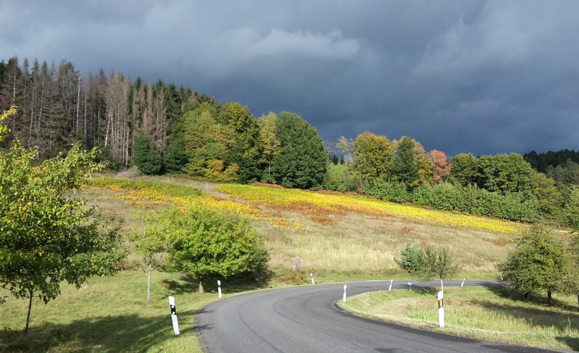 Wald Blätter in Herbstfärbung