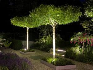 Beleuchtete Dachplatanen und Eibenkissen, Edelstahl-Umrandung