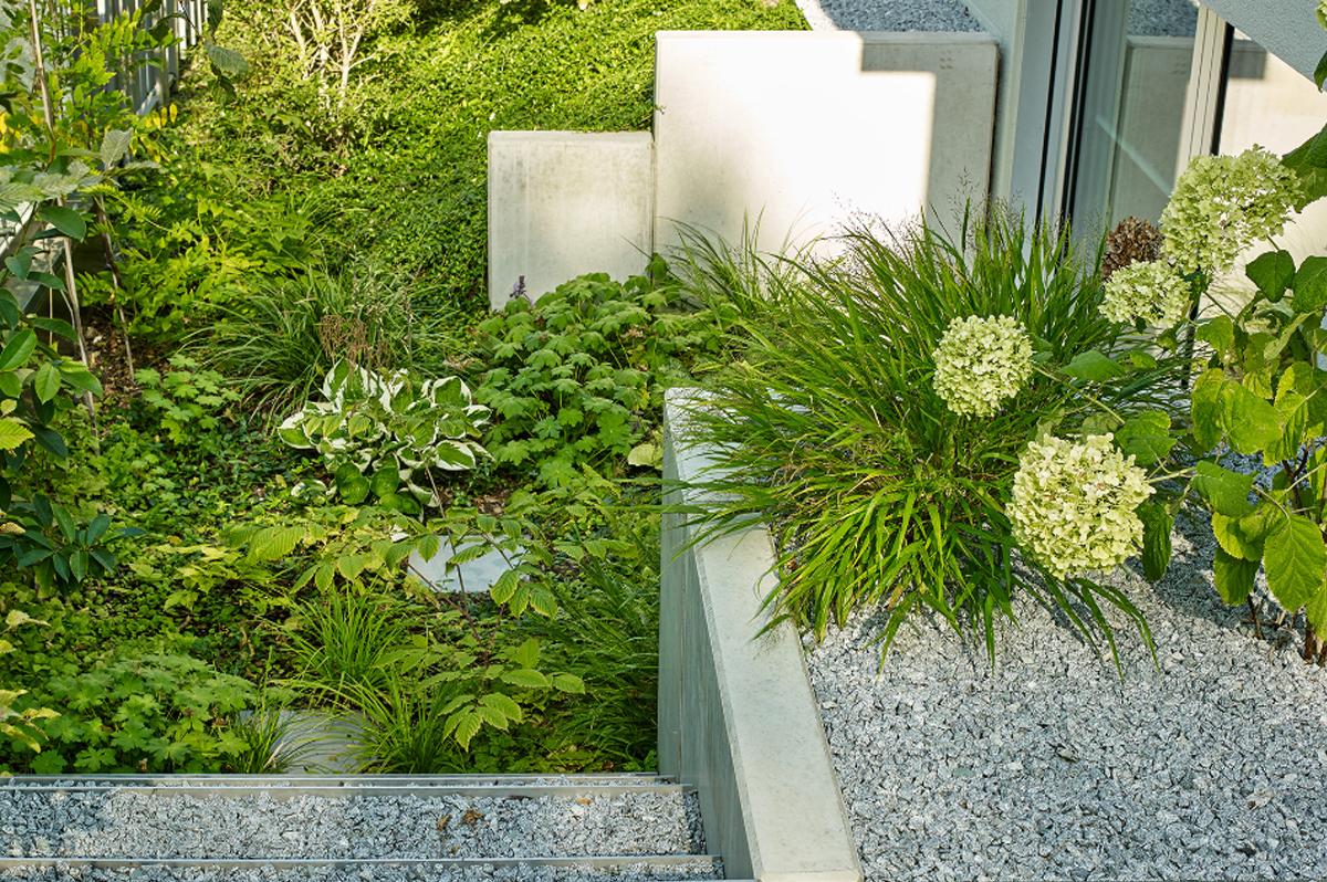 Gartendesign | Moderner Garten | Funkien, Hortensien und Gräser